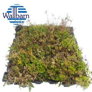 wallbarn-green-roof-patch