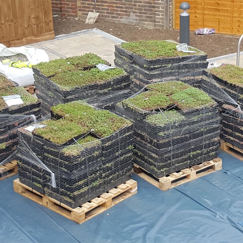 Wallbarn M Tray Modular Sedum Wildflower Green Roof